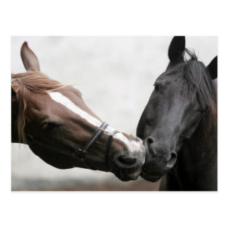 Kissing Horses Postcard