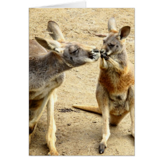 Kissing Kangaroos Card