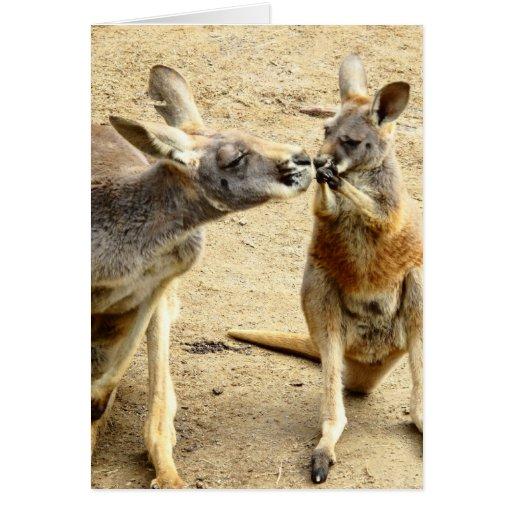 Kissing Kangaroos Greeting Card