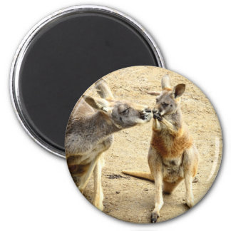 Kissing Kangaroos Magnet