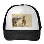 Kissing Kangaroos Trucker Hat