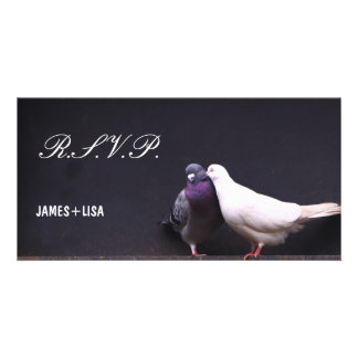 Kissing Love Birds Card