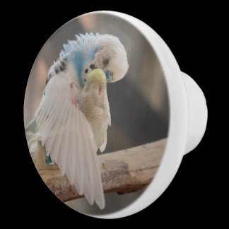 Kissing Love Birds Photo Cabinet Knob /