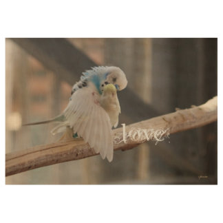 Kissing Love Birds Photo Custom 29x19 Wood Poster