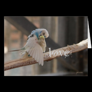 Kissing Love Birds Photo Custom Card