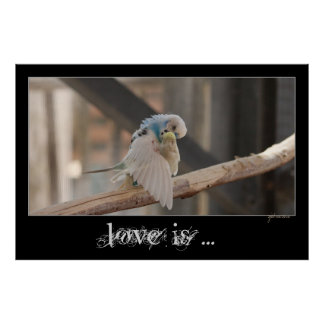 Kissing Love Birds Photo Personalized Custom 48x32 Poster