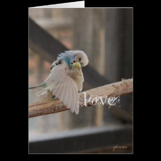 Kissing Love Birds Photo Personalized Custom Card