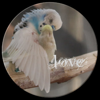 Kissing Love Birds Photo Personalized Custom Dinner Plate