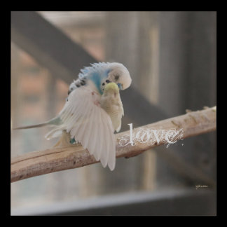 Kissing Love Birds Photo Personalized Custom Panel Wall Art
