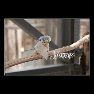 Kissing Love Birds Photo Personalized Custom Photo
