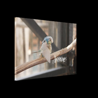 Kissing Love Birds Photo Personalized CUSTOM SIZED Canvas Print