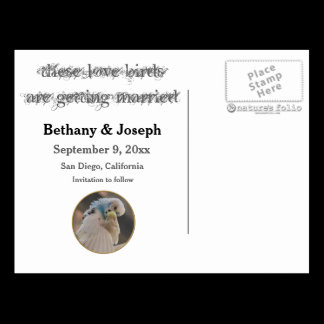 Kissing Love Birds Photo Save The Date Postcard
