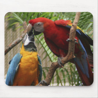 Kissing Macaws Mouse Pad
