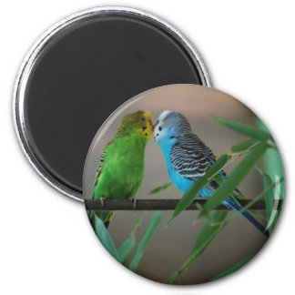 kissing parakeets magnet