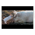 Kissing Piglet Greeting Card