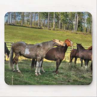 Kissing Pinto Stallion & Sorrel Mare Equine Photo Mouse Pad