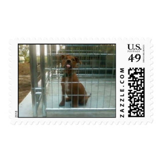Kissing pit bull postage
