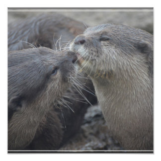 Kissing River Otters Poster