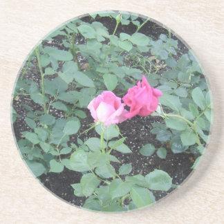 Kissing Roses Sandstone Coaster
