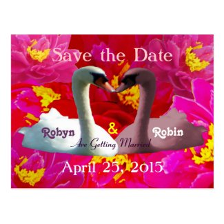 Kissing White & Pink Swans Save the Date Postcard