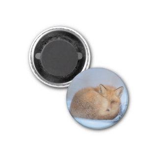 Kit Fox Magnet