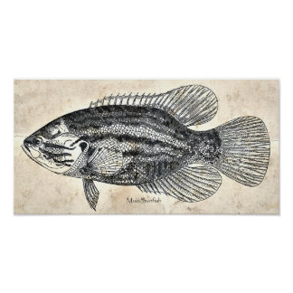 Kitchen Decor Wall Art Vintage Fish Mud Sunfish