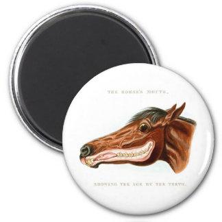 Kitsch Vintage Horse Head Scientific Illustration 2 Inch Round Magnet