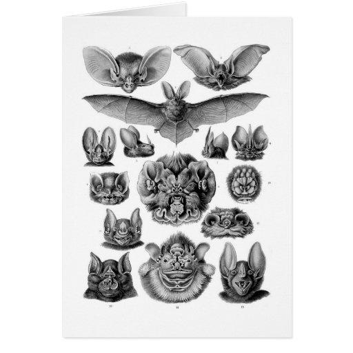 Kitsch Vintage Illustration Crazy Bats Card