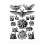 Kitsch Vintage Illustration Crazy Bats Post Cards
