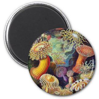 Kitsch Vintage Scientific Illustration Anemones 2 Inch Round Magnet