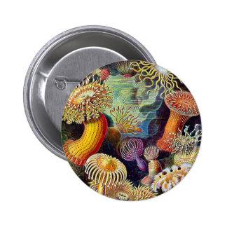 Kitsch Vintage Scientific Illustration Anemones Button