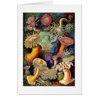 Kitsch Vintage Scientific Illustration Anemones Card