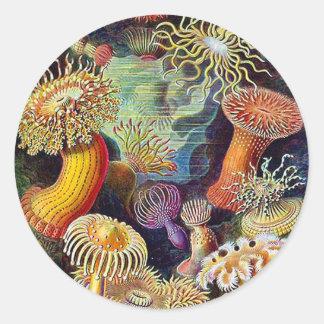 Kitsch Vintage Scientific Illustration Anemones Classic Round Sticker