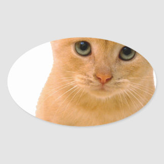 Kitteh.png Oval Sticker