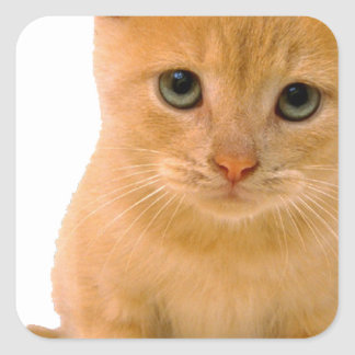 Kitteh.png Square Sticker