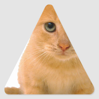 Kitteh.png Triangle Sticker