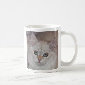 Kitten 1 Mug