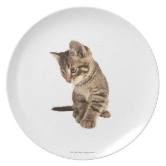 Kitten 2 dinner plate