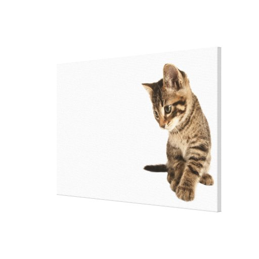 Kitten 2 gallery wrapped canvas