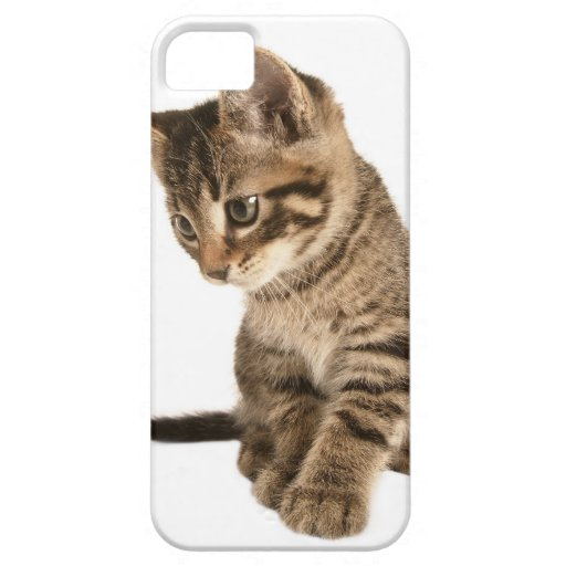 Kitten 2 iPhone 5 cover