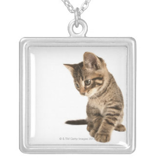 Kitten 2 silver plated necklace