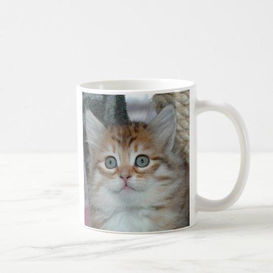 Kitten 5 Mug