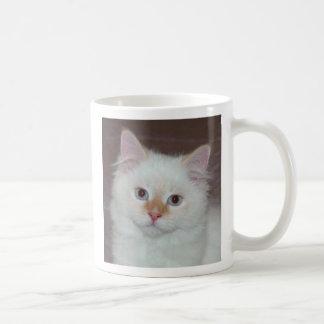 Kitten 6 Mug