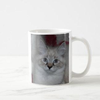 Kitten 7 Mug