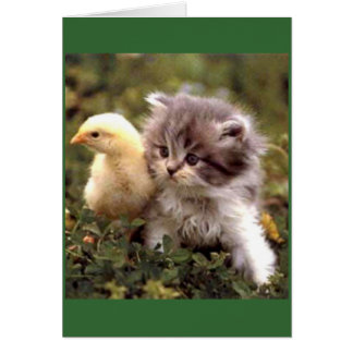 Kitten and Baby Chick Greeting Card