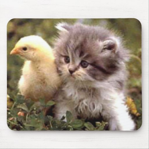 Kitten and Baby Chick Mouse Pad
