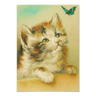 Kitten And Butterfly Poster