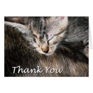 Kitten and Cat Thank You Card