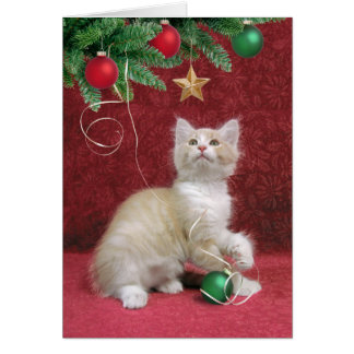 Kitten and Christmas Tree Card