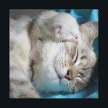 """Kitten and mom canvas print<br><div class=""""desc"""">Cute cats photo wall art</div>"""